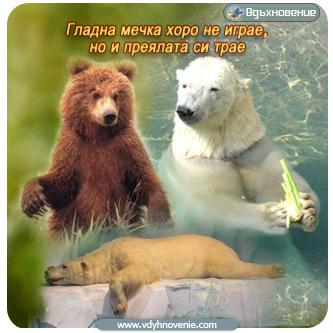 Гладна мечка хоро не играе, но и преялата си трае