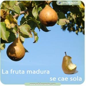La fruta madura se cae sola
