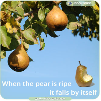 When the pear is ripe it falls by itself